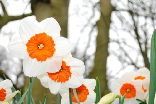 bloom-283020_1920358a5.jpg
