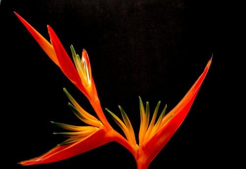 blossom-200933_192069038.jpg
