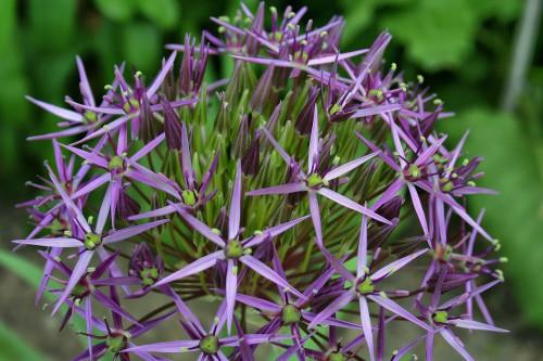 flower-139237_19202bcd5.jpg