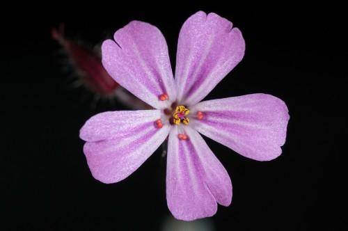 flower-171644_1920e0a2f.jpg