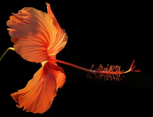 flower-182407_192027828.jpg