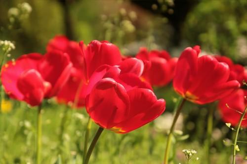 flower-722791_1920f13e1.jpg