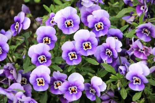 flowers-200270_192046e5f.jpg