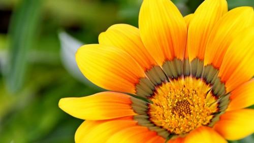 yellow-715540_1920b4c60.jpg